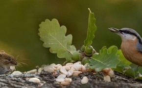 Picture leaves, nature, bird, stump, mouse, nuts, animal, rodent, acorns
