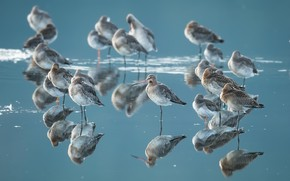 Picture water, birds, reflection