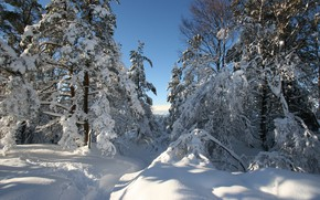 Picture winter, snow, trees, Norway, the snow, path, Hordaland
