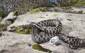 Picture nature, stone, snake