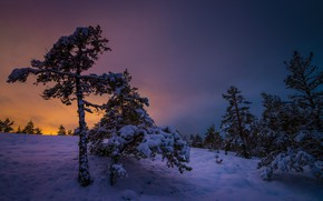 Picture winter, snow, trees, sunset, Finland, Finland, Varsinais-Suomi, Southwest Finland