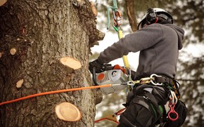 Picture ropes, chainsaw, worker, safety measures, work at height