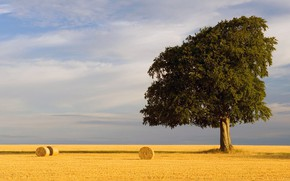 Picture summer, sky, Tree, field, nature, wheat straw