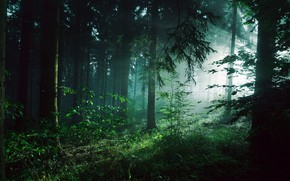 Picture greens, forest, summer, light, trees, fog, thickets