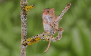 Picture sprig, background, mouse