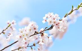 Picture spring, macro, Sakura, sakura, the sky, branch, spring