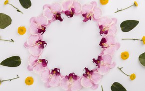 Picture flowers, round, orchids