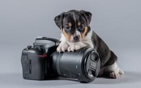Picture background, baby, the camera, Nikon, puppy, doggie, Danish-Swedish farmdog