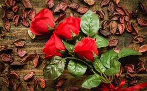 Picture flowers, roses, bouquet, petals