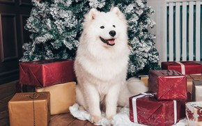 Picture language, white, look, pose, room, dog, Christmas, gifts, puppy, New year, tree, face, sitting, a …