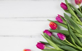 Picture white, background, wood, tulip