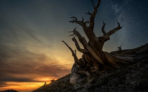 Picture stars, night, branches, tree, slope, snag, twilight, dry