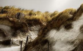 Picture beach, nature, dunes