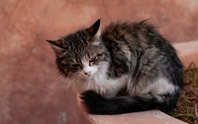 Picture cat, pose, kitty, grey, background, unhappy, face, sitting, striped, pot, обиженный