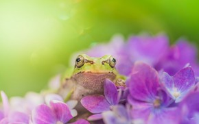 Picture summer, flowers, frog