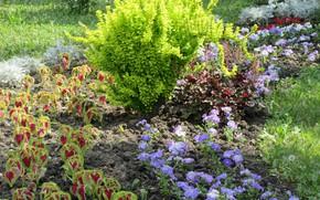 Picture Flowers, The city, Plants, Flowerbed, Meduzanol ©, Summer 2018