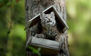Picture tree, cub, kitty, lynx, bokeh, feeder, a small lynx, Svetlana Pisareva, Mind you I'm in …