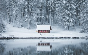 Picture winter, forest, snow, lake, house, reflection, in the snow, shore, hut, ate, the snow, pine, …