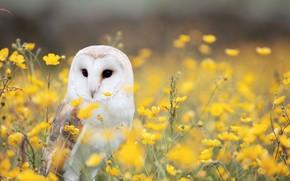 Picture field, flowers, owl, bird