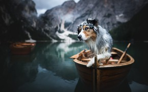 Picture mountains, nature, lake, animal, boat, dog, dog, The Dolomites, Aussie