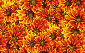 Picture flowers, background, a lot