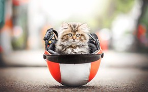 Picture look, fluffy, helmet, kitty, bokeh