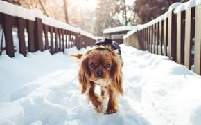 Picture winter, snow, bridge, dog, morning, bridge, dog, winter, snow, morning