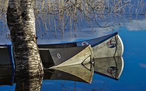 Picture lake, tree, spring, boats