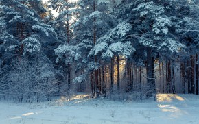 Picture Nature, Winter, Snow, Wallpaper, Forest, Trees