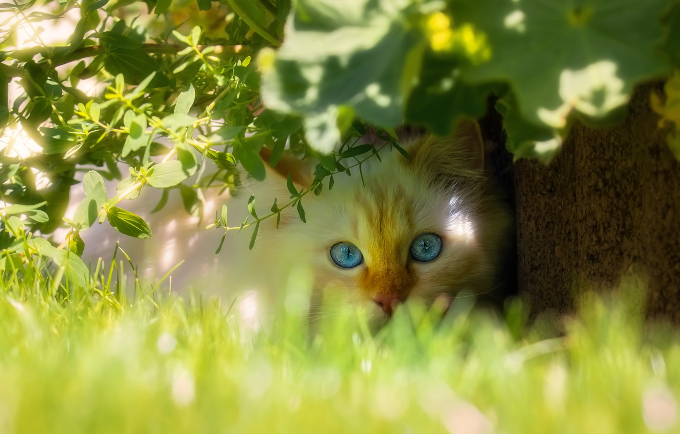 Photo wallpaper cat, white, grass, cat, look, face, leaves, light, branches, nature, pose, background, portrait, garden, red, …