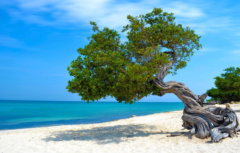 Wallpaper Sand Sea Beach Tree Caribbean Images For Desktop Section Priroda Download