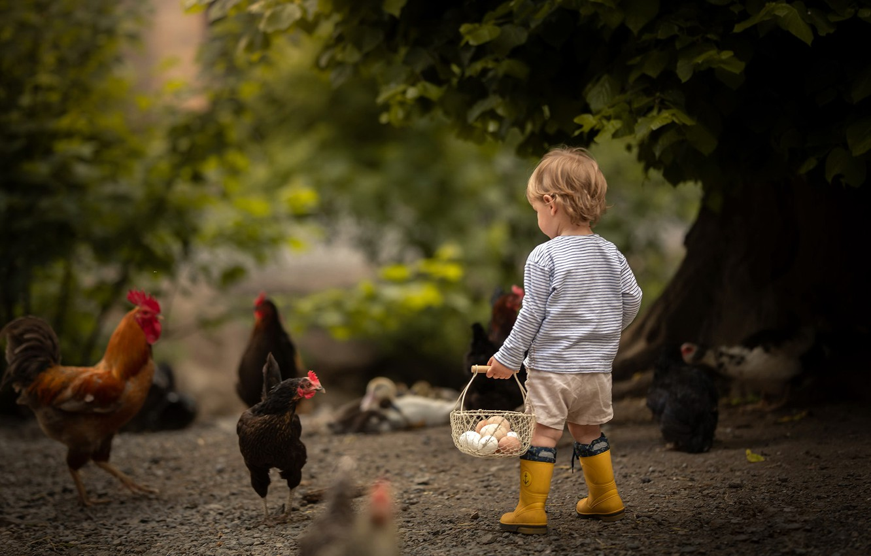 Photo wallpaper boy, eggs, chicken