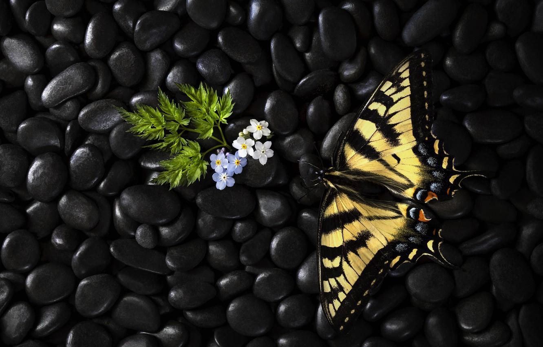 Photo wallpaper flowers, butterfly, butterfly, flowers, Stephen Clough