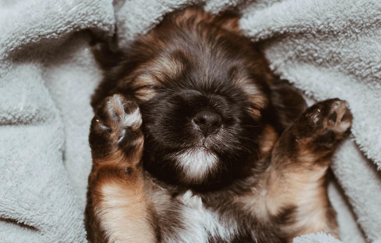 Photo wallpaper face, legs, dog, blanket, sleeping, puppy