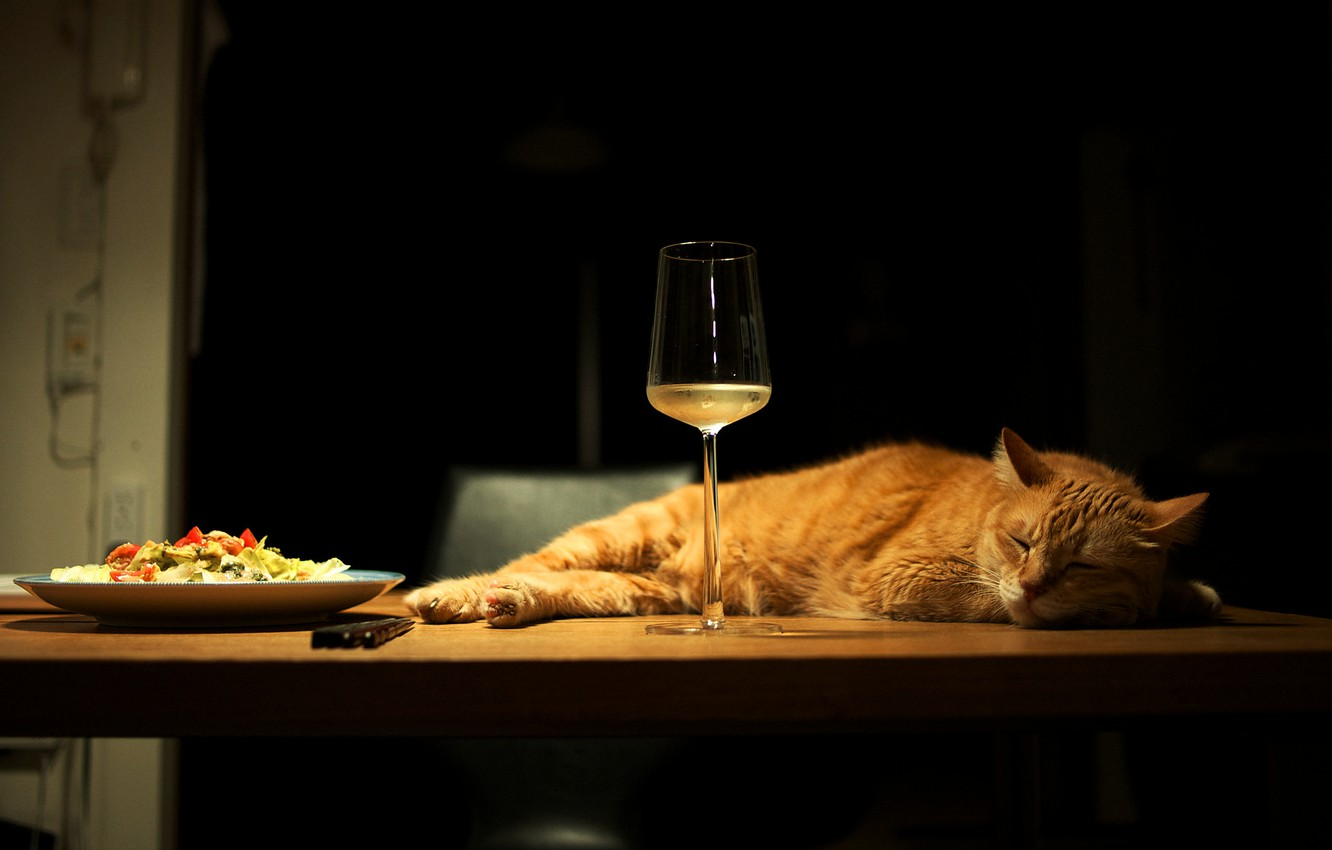 Photo wallpaper cat, cat, light, pose, table, wine, glass, food, sleep, paws, fluffy, red, plate, refrigerator, chair, …