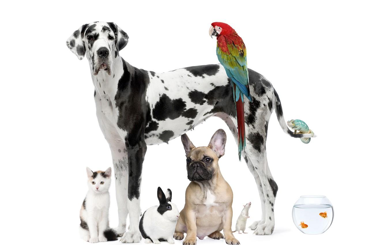 Photo wallpaper cat, fish, dog, rabbit, parrot, Dalmatians
