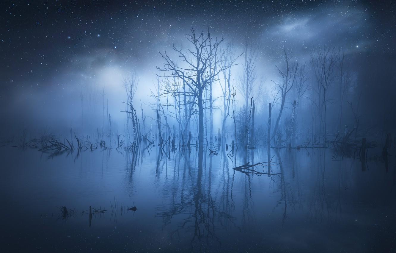 Photo wallpaper water, stars, trees, fog, reflection, glow, trees, water, glow, stars, fog, reflection, Christian Lindsten