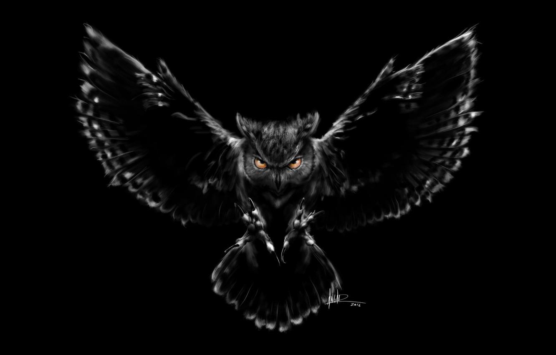 Photo wallpaper owl, bird, figure, wings, feathers, beak, art, claws, black background