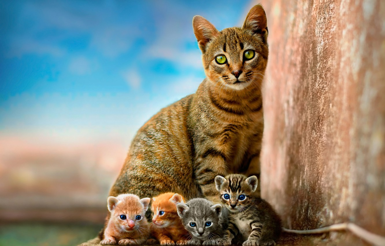 Photo wallpaper cat, the sky, children, kitty, wall, kittens, kitty, kids, red, grey, mom, blue background, Quartet, …