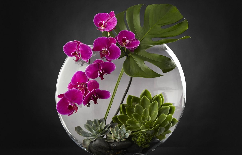 Photo wallpaper aquarium, plants, Orchid