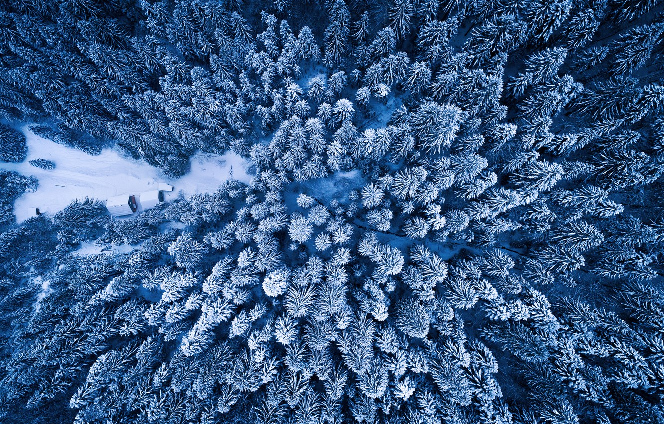 Photo wallpaper winter, forest, the view from the top, Adnan Bubalo