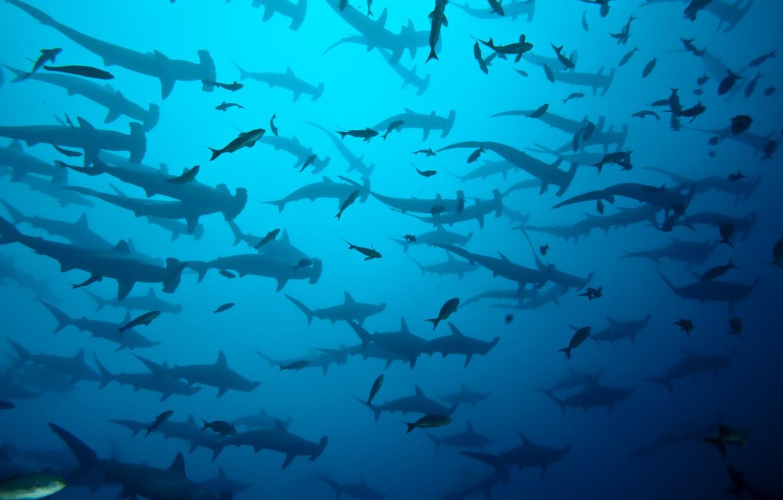 Photo wallpaper sea, ocean, blue, costa rica, shark herd, coco island