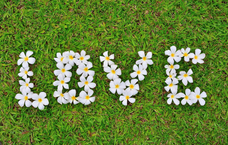 Photo wallpaper grass, love, flowers, love, white, grass, flowers, romantic, plumeria, plumeria