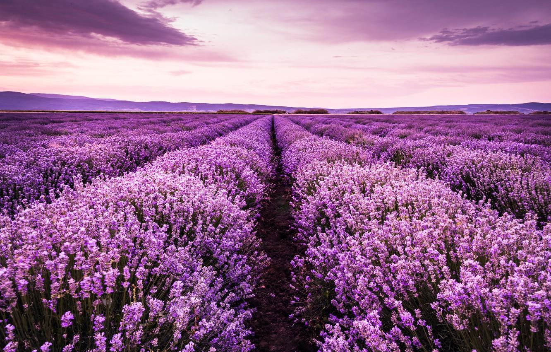 Photo wallpaper field, summer, the sky, landscape, sunset, flowers, purple, lavender