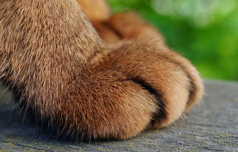 Photo wallpaper cat, cat, macro, paw