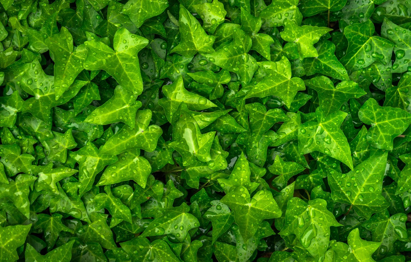 Photo wallpaper greens, leaves, water, plant, water drops