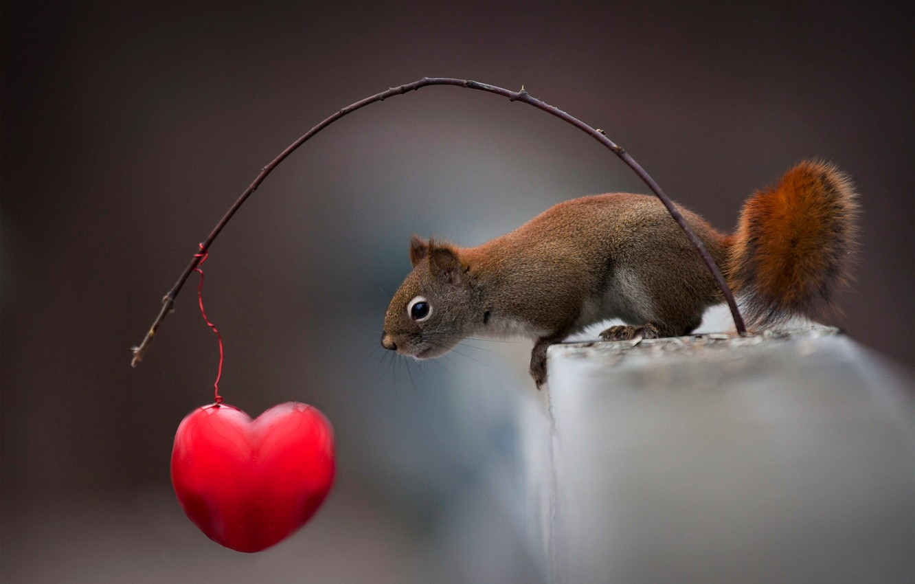 Photo wallpaper animal, branch, protein, heart, curiosity, animal, rodent