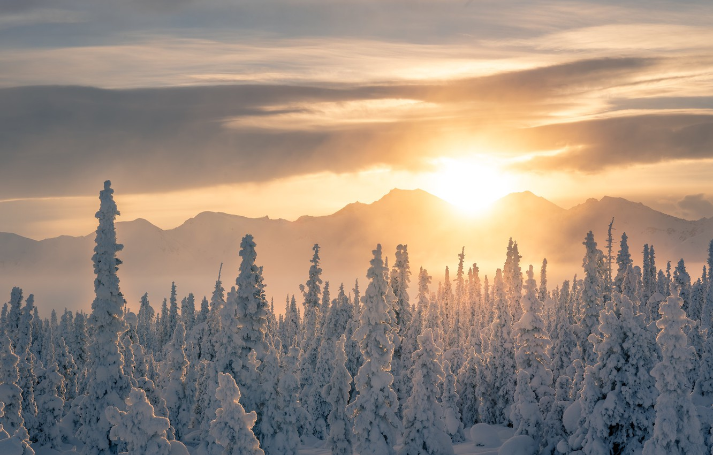 zima inei les sneg derevia priroda eli sugroby svetlyi fon z