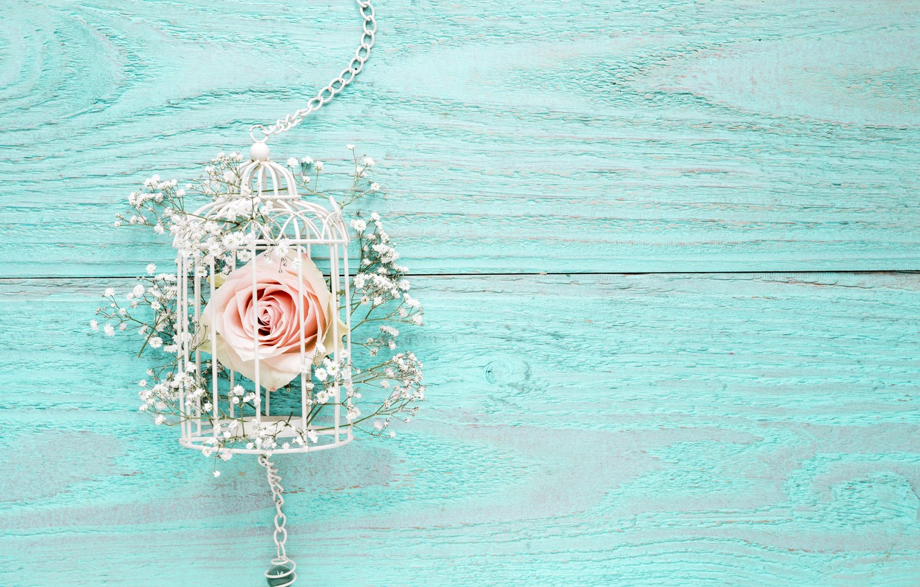 Wallpaper Flowers Background Roses Pink White Wood Blue