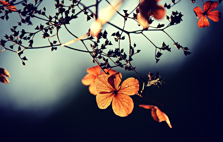 Photo wallpaper flower, macro, orange, tree, branch
